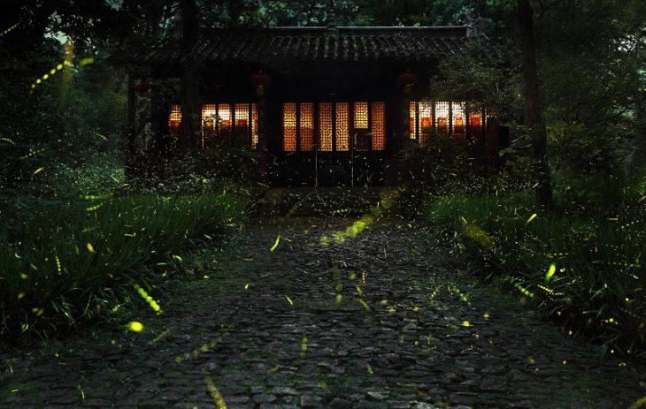 luciérnagas en casa japón