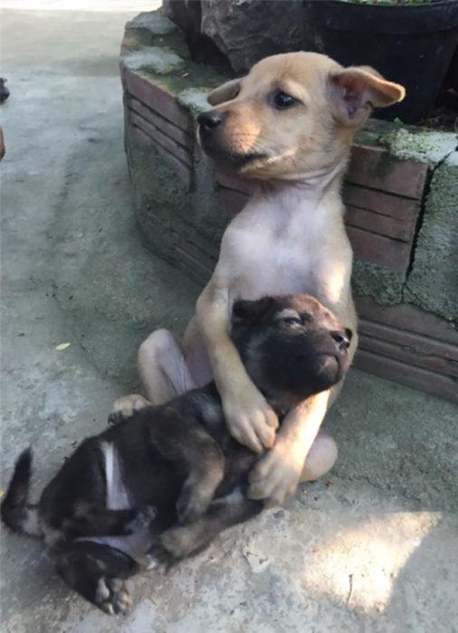 peero café abrazando a perro negro