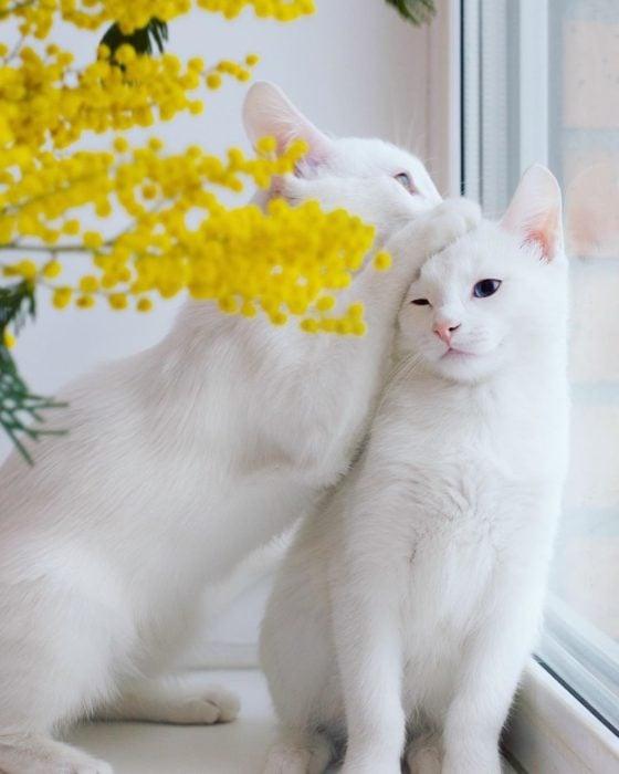 gastas blancas con flores amarillas
