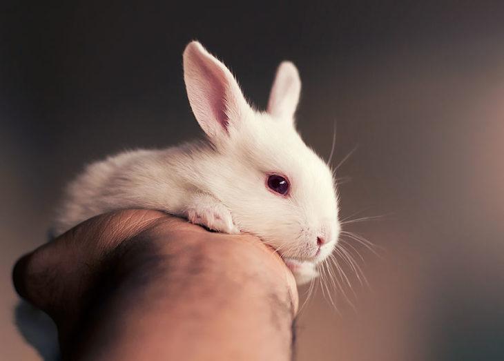 conejo blanco en mano