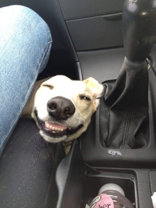 perro sonriendo entre las piernas de un hombre