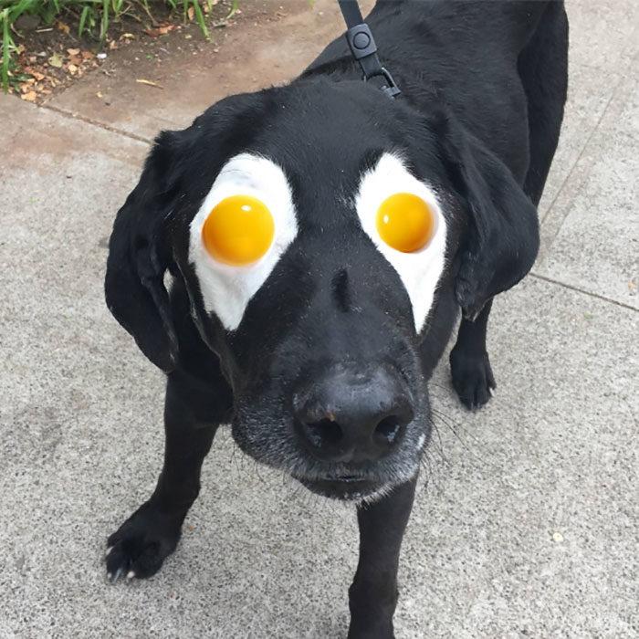 huevos estrellados en los ojos del perrito