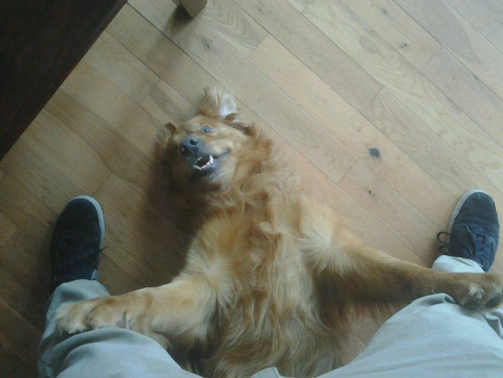 perro en los pies de persona