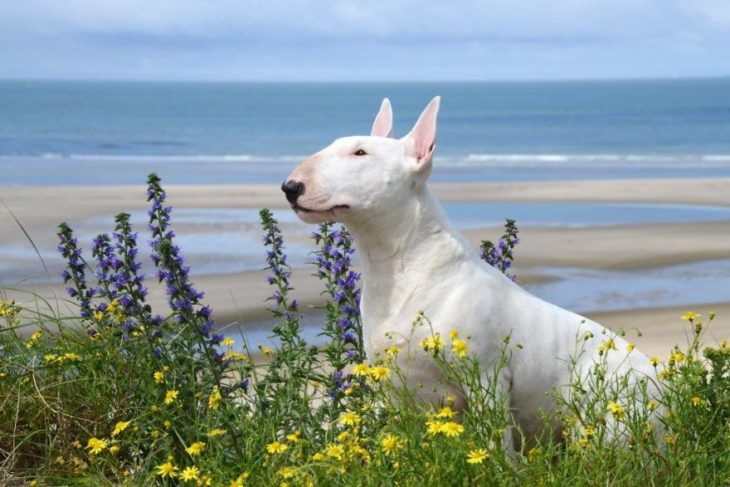 perra blanca entre flores a la orilla del mar
