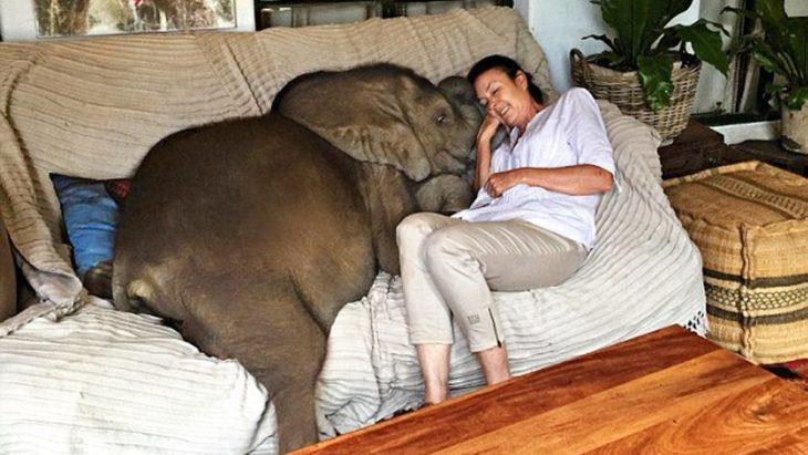 elefante bebé y mujer