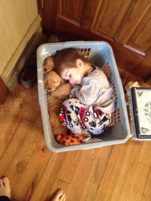 niño durmiendo en un cesto con cachorros