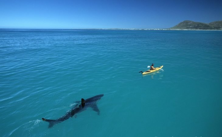tiburón tras un bote