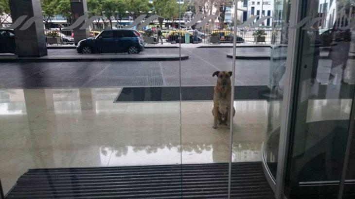 perrito fuera de una puerta de vidrio