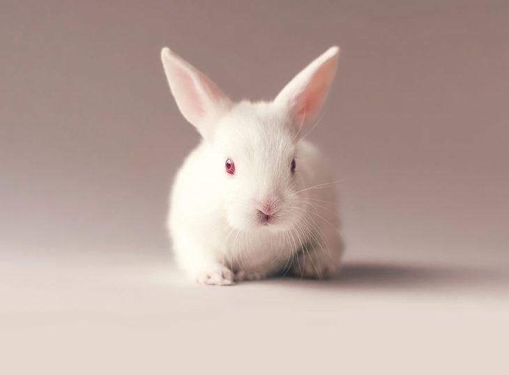 conejo bonito