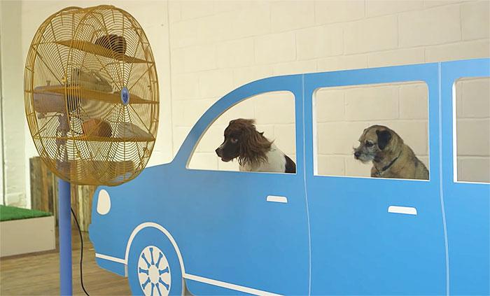 carro de cartón con perro