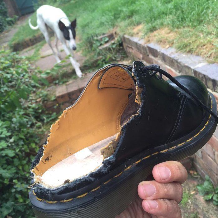 un zapato que se lo comio un perro