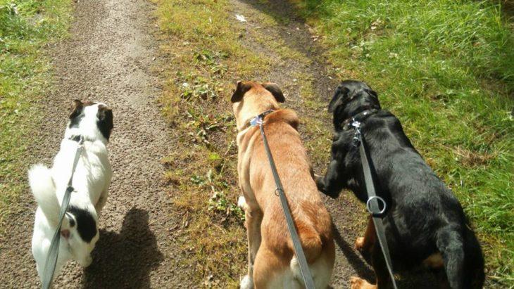 tres perritos paseando