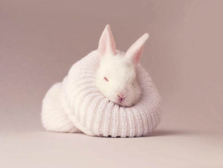conejo recién nacido dentro de calcetín