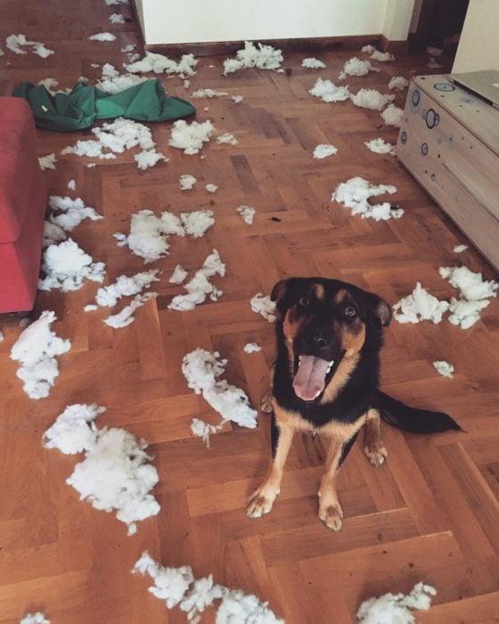 perrito que arruinó la almohada