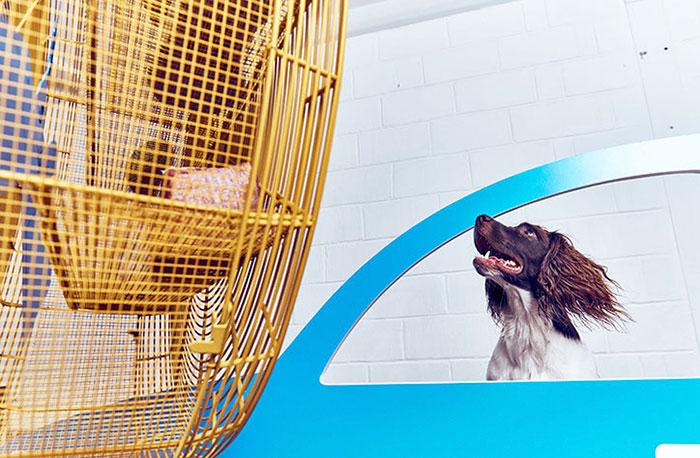 ventilador y perros