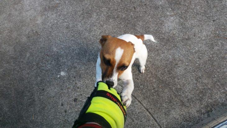 Cartero jugando con un perro