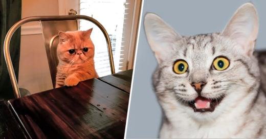 COVER 22 Gatos que muestran que mientras más raros sean más adorables se vuelven