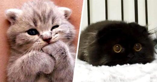 Cover-gatitos