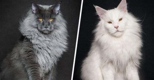 Cover-gatos