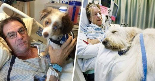 Cover-hospital-mascotas
