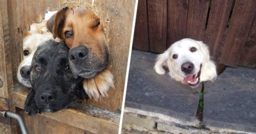 Cover-perros-hola