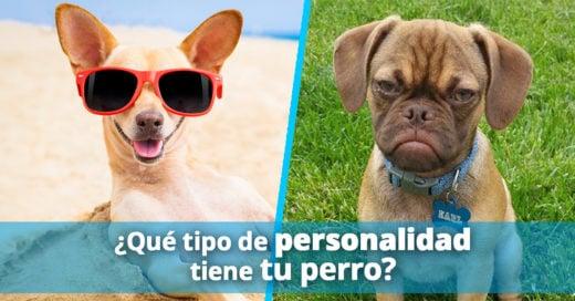 Cover-personalidad-perro