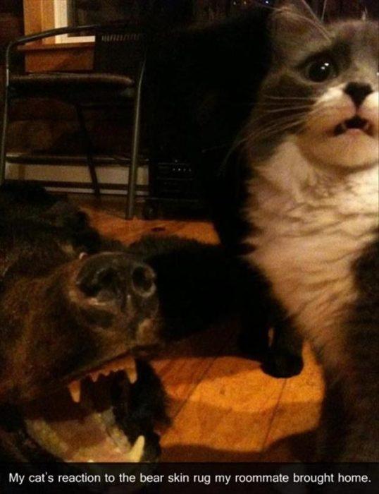 Gato con cara de susto mientras ve una alfombra de oso en el piso