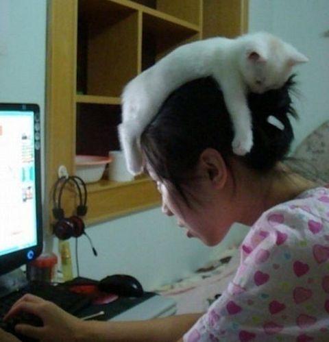 Gato dormido en la cabeza de su dueña