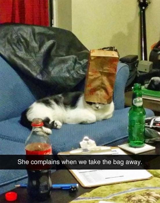 Gato con una bolsa de papel en la cabeza