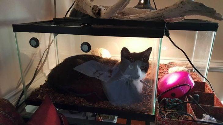 Gato acostado en una pecera