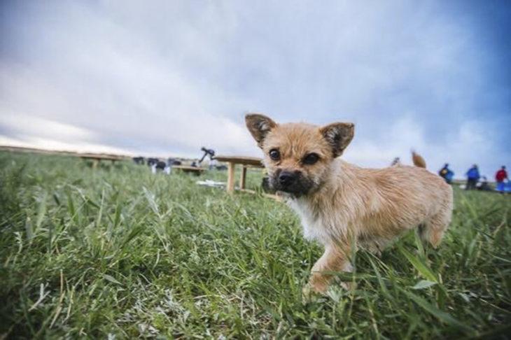 Cachorrita en campo