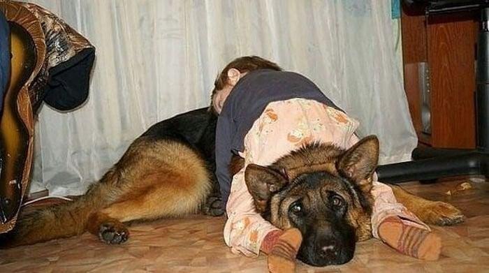 Niña dormida sobre perro pastor aleman