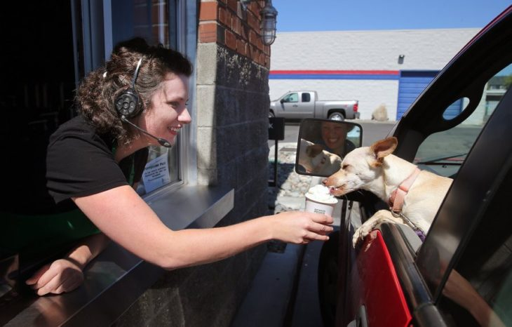 Starbucks entrega su puppuccino a un perro en un carro