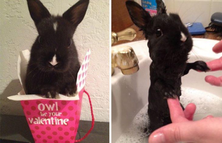 Conejo esponjosito antes del baño, conejo flaquito durante su baño