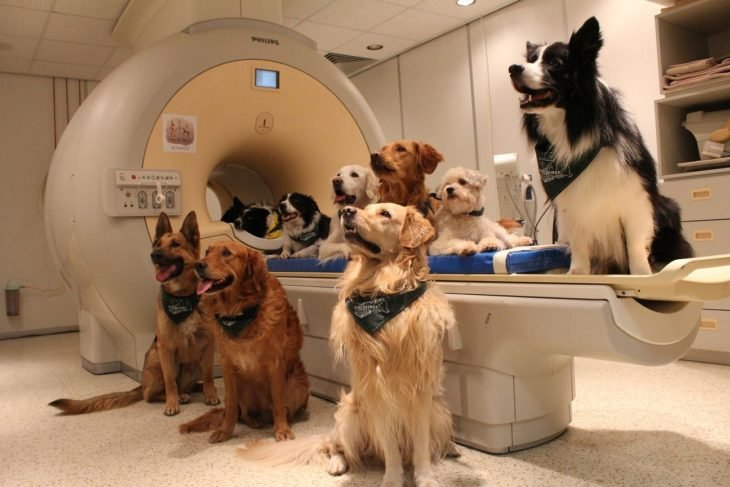 Trece perros en un consultorio medico para una investigación