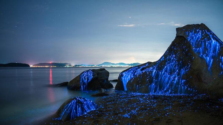 Luz de camarones bioluminiscentes en roca de Japón
