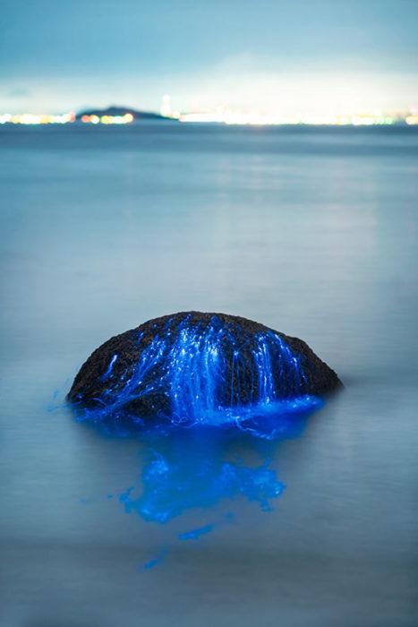 Roca en medio del mar de Japón con camarones bioluminiscentes
