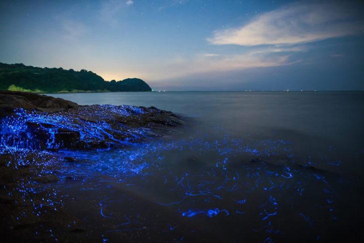 Rios azules Japón camarones bioluminiscentes