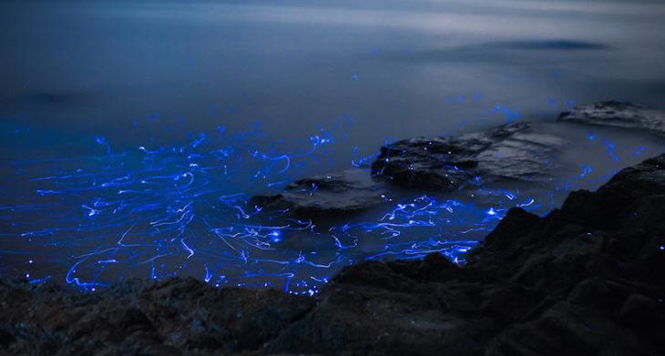 Luz bioluminiscente en la orilla del mar de Japón