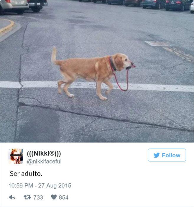 Tuits ser adulto. perro llevándose a sí mismo de la correa