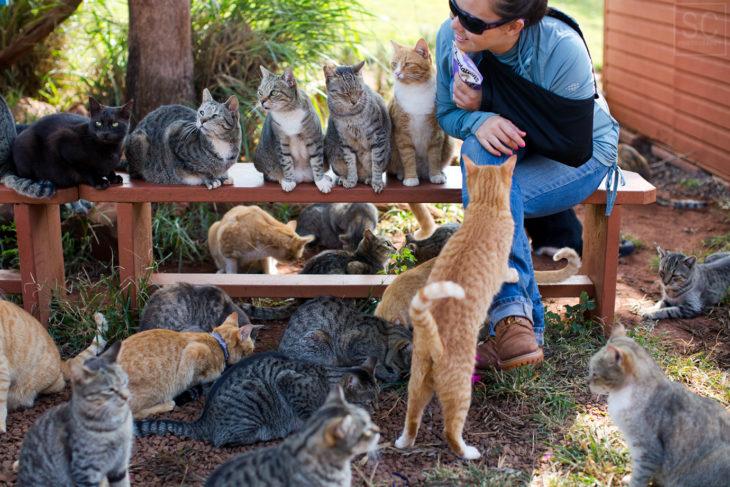 El Santuario del Gato