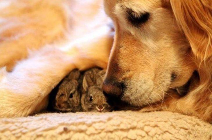 perra conejos