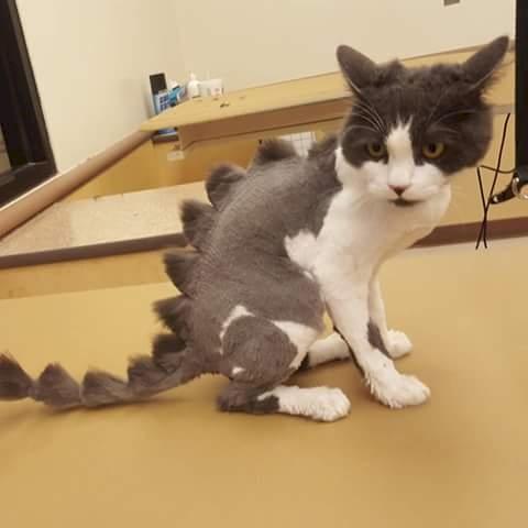 gato lagarto