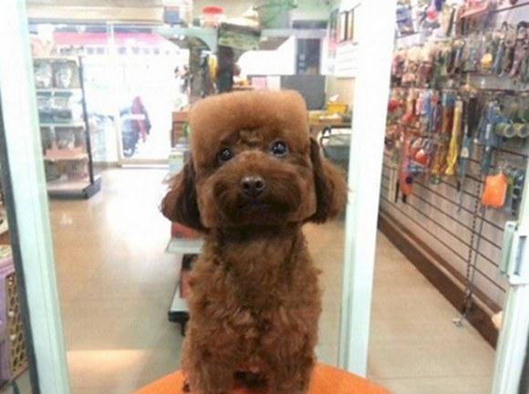 cabeza de dado perro