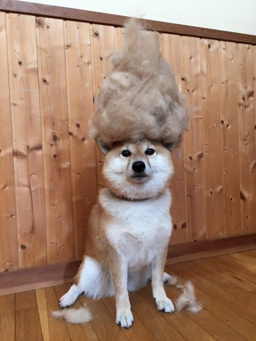 perro mojon