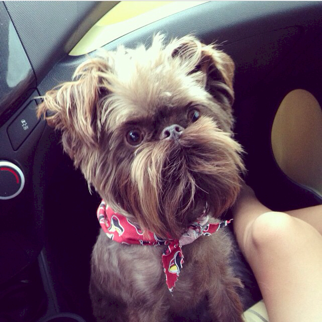 perro con bigotes