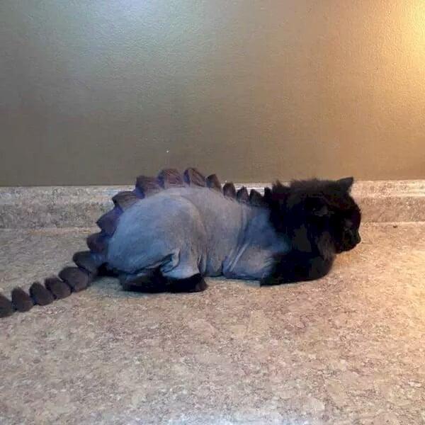 dino gato