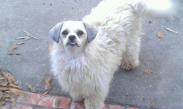 perro con traje de pelo