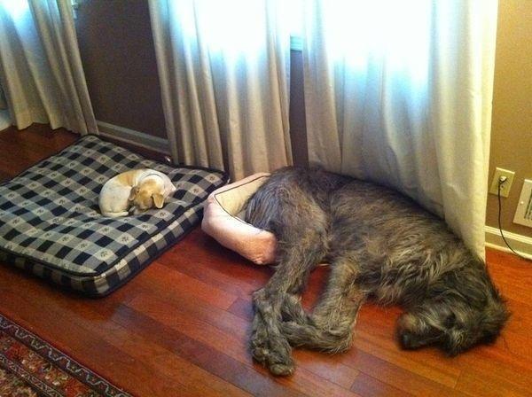 Perros recostados en cojines
