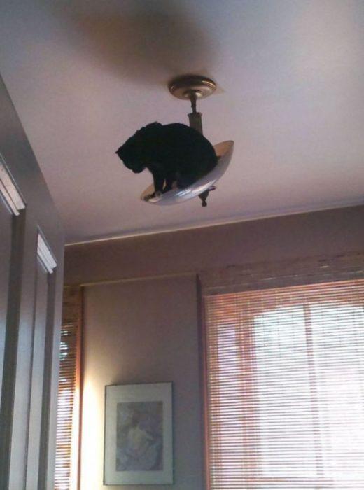 Gatos que se meten en problemas